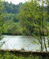 im Naturschutzgebiet_Scheerweiher